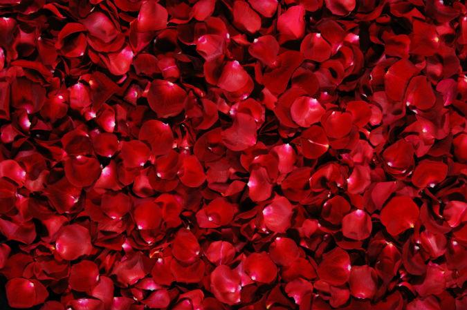Rosenblätter bilden ein Rosenbett
