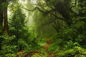 Dschungel Urwald