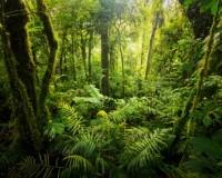 Dschungel Camp 2016: Das sind die Kanditaten