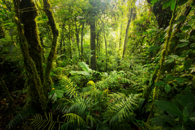 Pflanzen im Dschungel