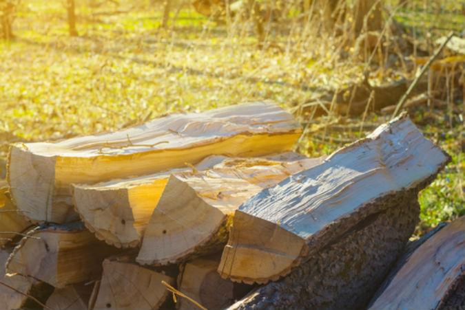 Geschlagens Holz in der Sonne