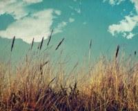 Gräser im Wind mit blauem Himmel