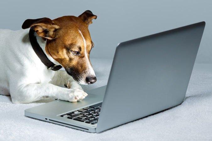 Hund-vor-dem-Laptop