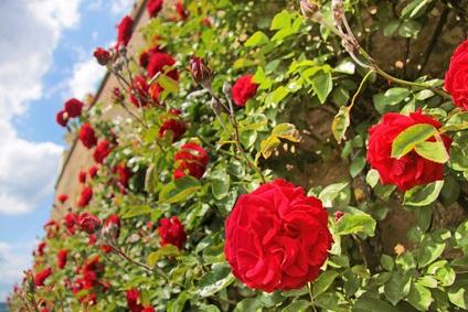 Die Telenova Rote Rosen erfreut sich bundesweiter Beliebtheit