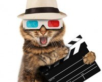 Fun Filme: Das sind die beliebtesten Kategorien!